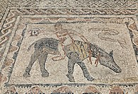 Mosaic, acrobat riding an animal, Roman archaeological site of Volubilis, UNESCO World Heritage Site, Meknes, Meknès-Tafilalet, Morocco, Maghreb, Nort...