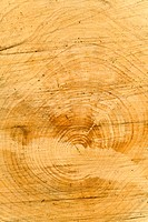 Detail of a log (thumbnail)