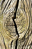 Cracked tree trunk