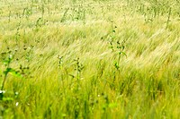Field with grasses