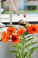 Bunch of orange Gerberas
