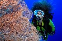 Taucherin mit Fächergorgonie bei Ras Nasrani, Sharm el Sheikh, Ägypten, Rotes Meer, Scuba diver and coral, Sharm el Sheikh, Aegypt, Red Sea