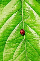 a ladybug sitting on a green leaf