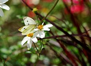 White butterfly and flower