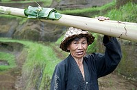 woman farmer in rice terrace in Bali,Indonesia