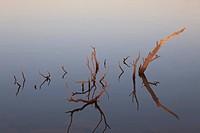 Dead plant in wetland, Galveston Island State Park, Galveston County, Texas, USA