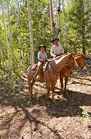 USA, Utah, horseback ride in Escalante with wranglers Jamie Barnson and Cash Barnson through ponderosa pine forest up steep trail to Aquarius Plateau ...