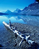Driftwood on Shore of Mountain Lake
