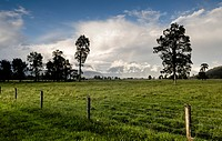 Electric fence and a large sheep pasture, against the backdrop of the Southern Alps, Fox Glacier, storm clouds with a rainbow, South Island, New Zeala...