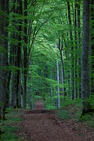 Forest path in the Danube Valley near Beuron leading to Burg Wildenstein Castle, Baden_Wuerttemberg, Germany, Europe