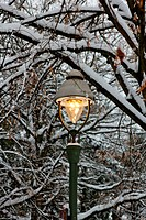 Street Light Among Snowy Branches