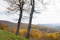 Shenandoah National Park , Virginia