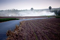 cereal crops and tractor spraying, Villafranca del Guadalquivir, Cordoba, Andalusia, Spain, Europe