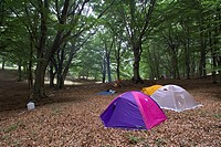 Campsite in a wood of beech on the Mount Camposauro  Parco Regionale Taburno Camposauro  Province of Benevento  Campania  Italy  Europe