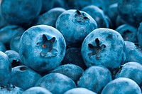 Fresh blue berries group