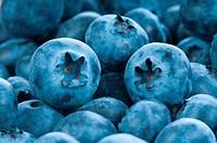 Fresh blue berries group