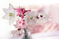 Pink And White Flowers In Glass Vase