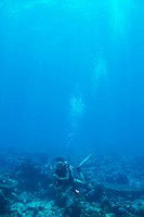 Young woman scuba diving underwater over a coral reef _ copyspace