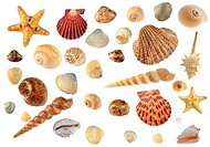 Set of sea cockleshells