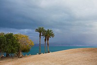 Three picturesque palm trees on a beach during a spring thunder_storm