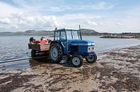 Fishermen loading whelks onto tractor and trailer, Porth Dinllaen, Morfa Nefyn, Lleyn Peninsula, Gwynedd, Wales, may