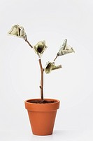 One_hundered dollar bills growing on potted tree