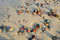 Colorful wet pebbles rubed by waves in sea sand.
