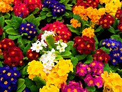 Bunch of multi colored flowers arranged together digital art