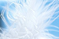 White feather blurry background