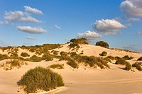Sandy dunes.
