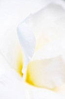 White petals background