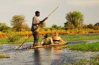 Kahnfahrer mit Touristen im traditionellen Mokoro Einbaum auf Exkursion im Okavango Delta, Botswana / Poler with tourists in a tradiional mokoro logbo...