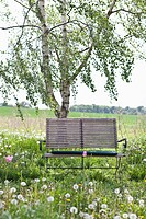 A wooden bench in a field