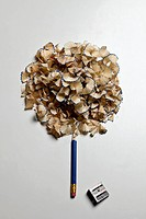 A pencil and pencil shavings made to look like a tree