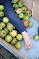 Boy lying among apples in apple cart