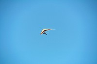 Hang glider against a clear blue sky