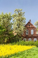 Idyllic farmhouse in the middle of a blooming rapeseed field, Lower Saxony, Germany, Europe