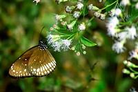 Butterfly perching on a wild plant