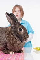 Boy looking at rabbit