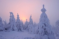 Germany, Saxony, View of snow covered trees at sunset