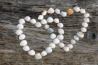 Hearts of shells