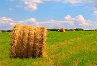Straw bales on field