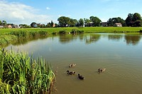 The duck pond at Wrea green,Lancashire,UK