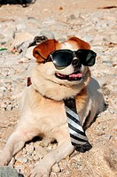 Funny puppy in sunglasses