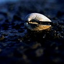 Clam shell on Eastern Long Island beach, New York