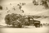 Antique farm truck loaded with hay
