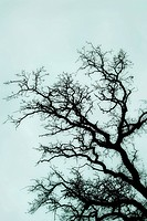 Bare black tree branches against sky