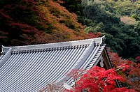 Japanese temple roof in autumn