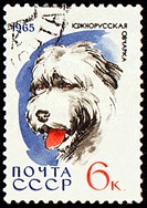 South Russian Shepherd Dog on post stamp