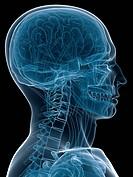 x_ray head